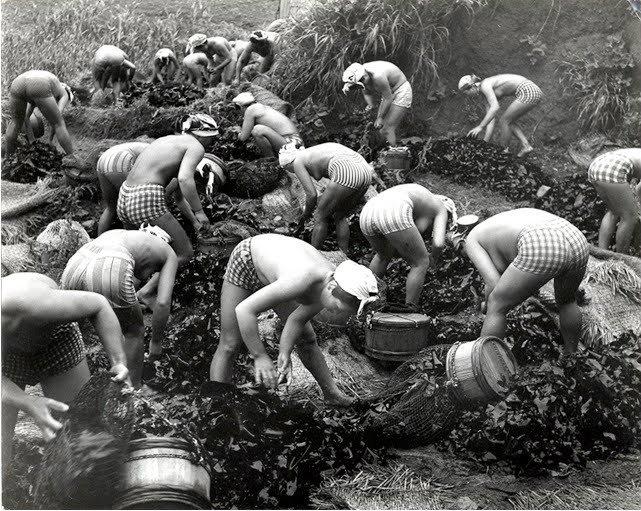 【画像あり】昭和の「海女さん」がお仕事してる写真が発見される。マジかぁwwwwwwwww・18枚目